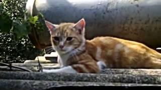 коту дали валерьянку , в первый раз и передоз