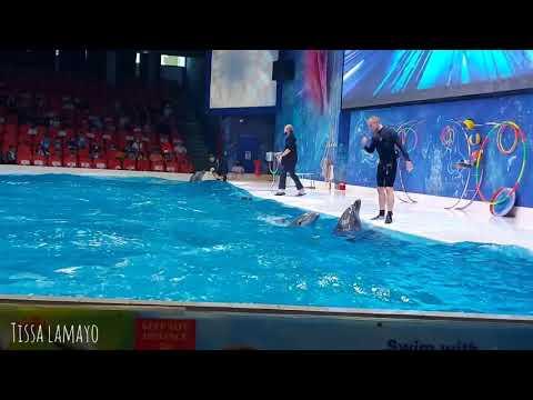 Last Part   Dubai Dolphinarium – Dolphin and Seal Show