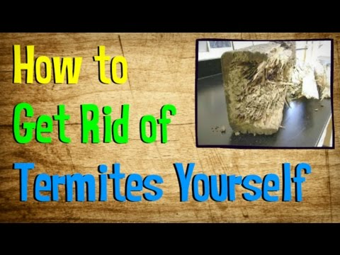 Your Getting Of Home Out Termites