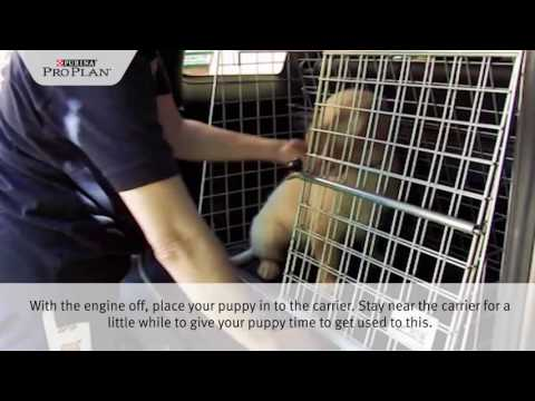 PURINA® PRO PLAN® Puppy tips - travelling with your puppy