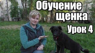ОБУЧЕНИЕ ЩЕНКА - ДРЕССИРОВКА СОБАКИ С НУЛЯ -  Урок 4 - Понять собаку