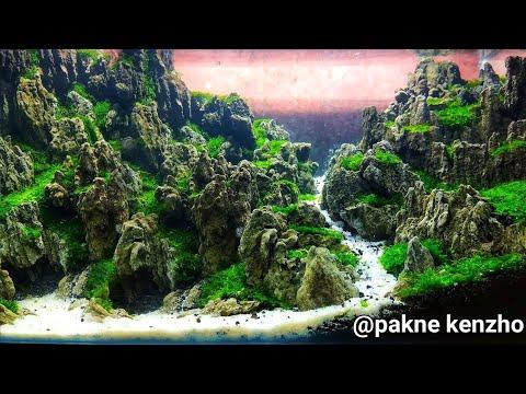 22 Cara Bikin Aquascape Pemula Bagian Ke 3 Youtube