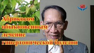 Абрикосом обыкновенным лечение гипертонической болезни l Толя ДоНгуенТхиеу