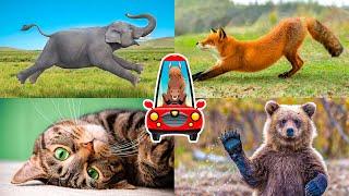 Животные для детей все серии подряд. Мультик про животных. Пазлы для детей