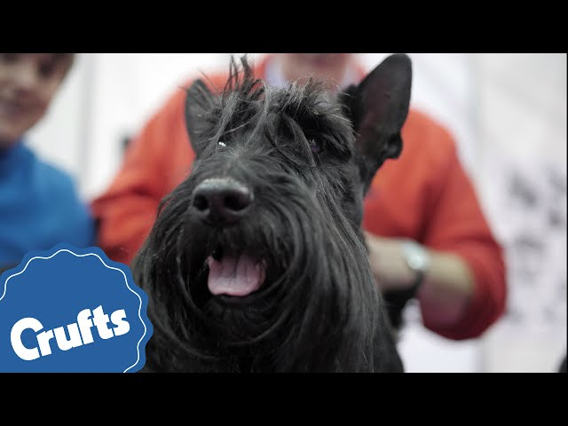 Which dog is right for you? Find out at Discover Dogs 2016!