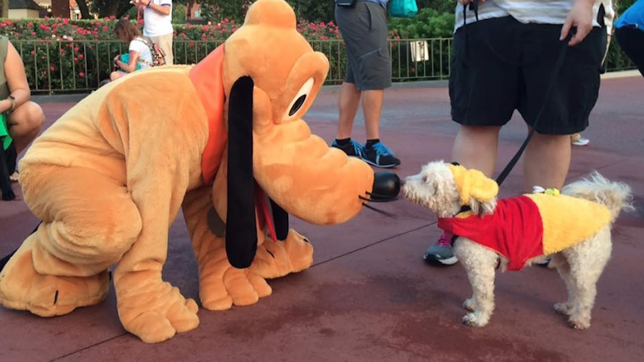 Disneyland Dog Day