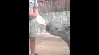 Gertjie enjoying feeding time
