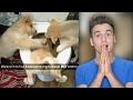 Funniest Animal Snapchats!