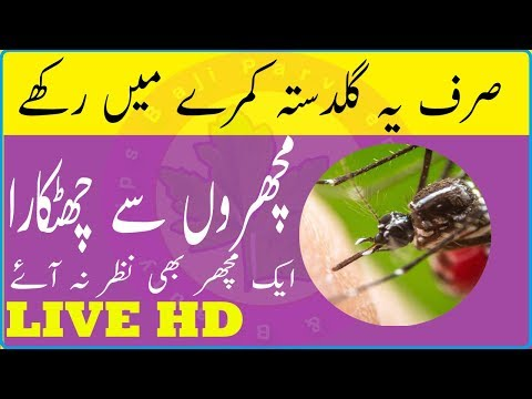 mosquito-killer-homemade---natural-mosquito-killer-safe-for-humans---bouquet-at-room-baji-parveen