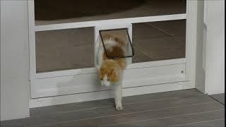 Москитная дверь с окошком для кошки. Германия