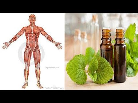 5-powerful-health-benefits-of-lemon-balm-melissa-essential-oil---natural-health-cures
