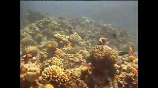 8 3 12 красное море водолаз в первый раз