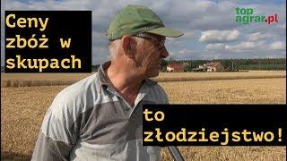 Żniwa 2019: Kombajny ruszyły w pole, ceny zbóż niskie