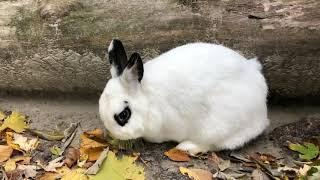 """PBI 3: Training """"Tator Tot"""" to become a Comfort Rabbit"""