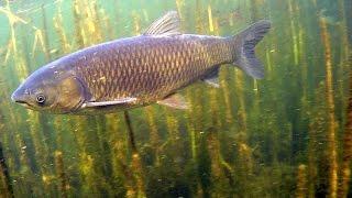 Co piszczy w wodzie jesienią? Autumn underwater