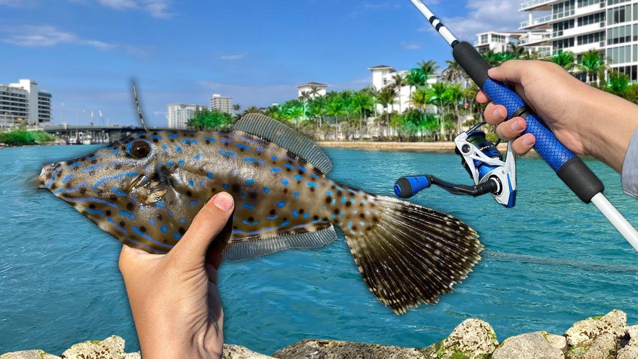 Catching Tropical AQUARIUM PET FISH in Paradise!! ($$$)