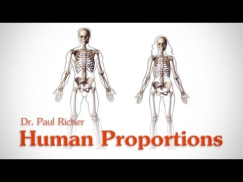 Human Figure Proportions