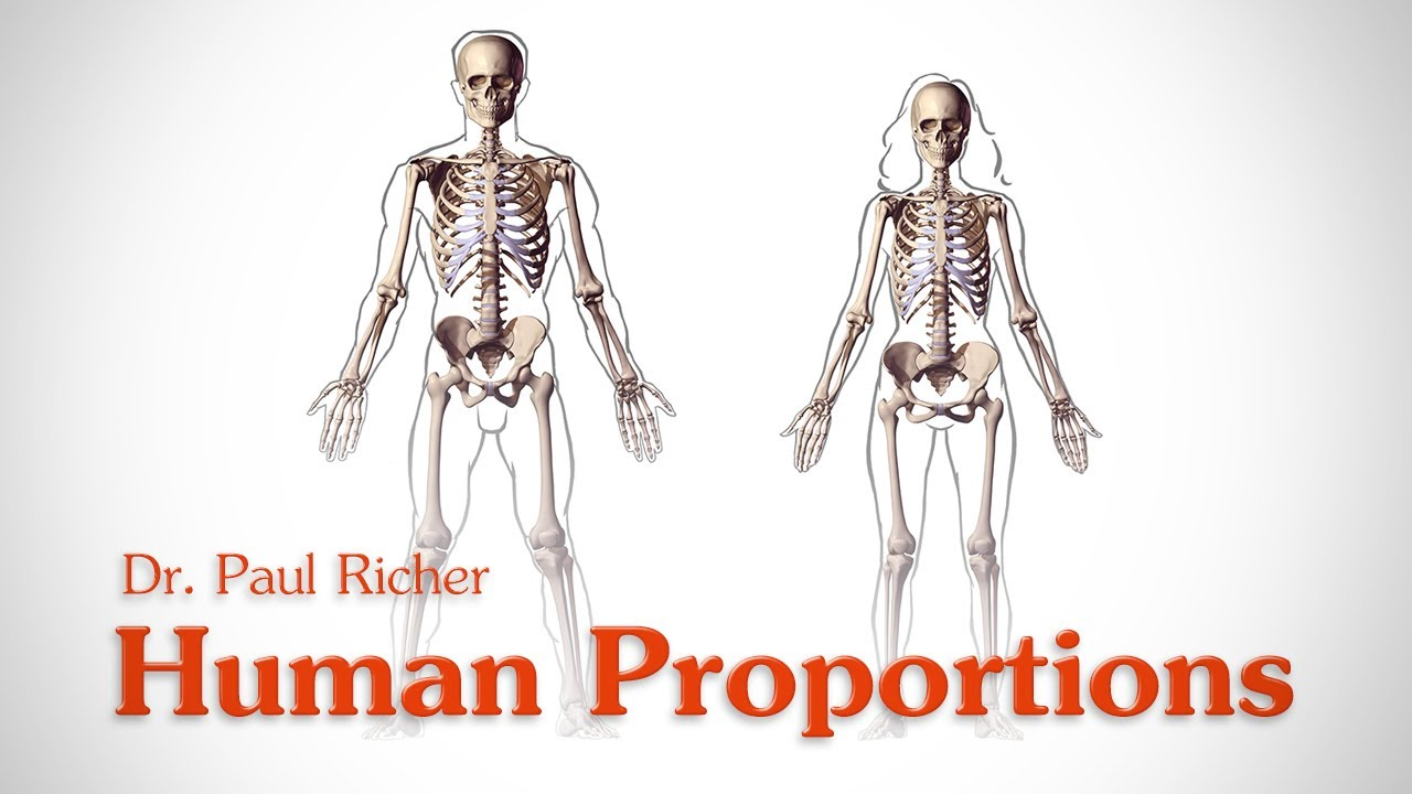 Human Figure Proportions - Average Figures - Dr. Paul Richer - YouTube