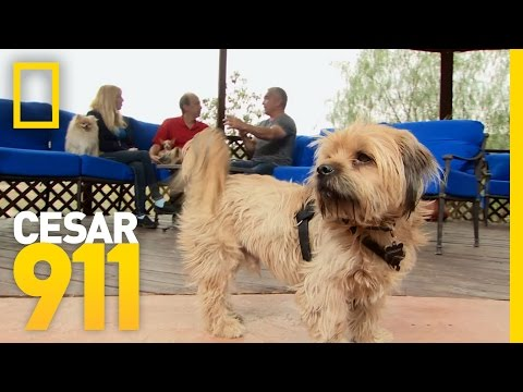 Schnoopy the Man Hater   Cesar 911