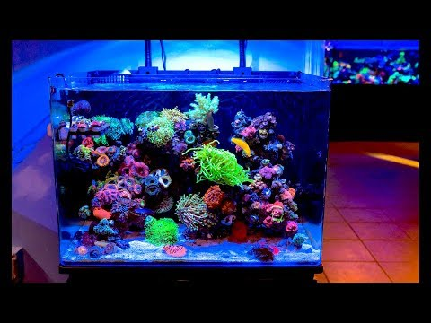 world wide corals lively presentation discussion reefstock 2018