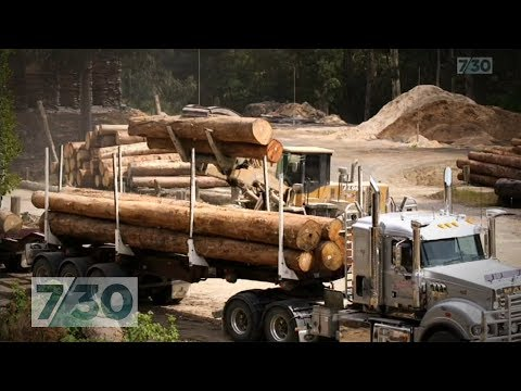 The 'theft' Of Australia's Endangered Forests Revealed | 7.30