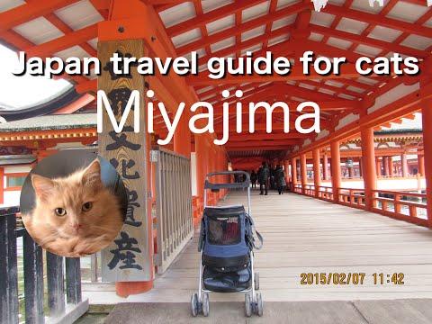 MIyajima in Hiroshima | Japan travel guide for cats