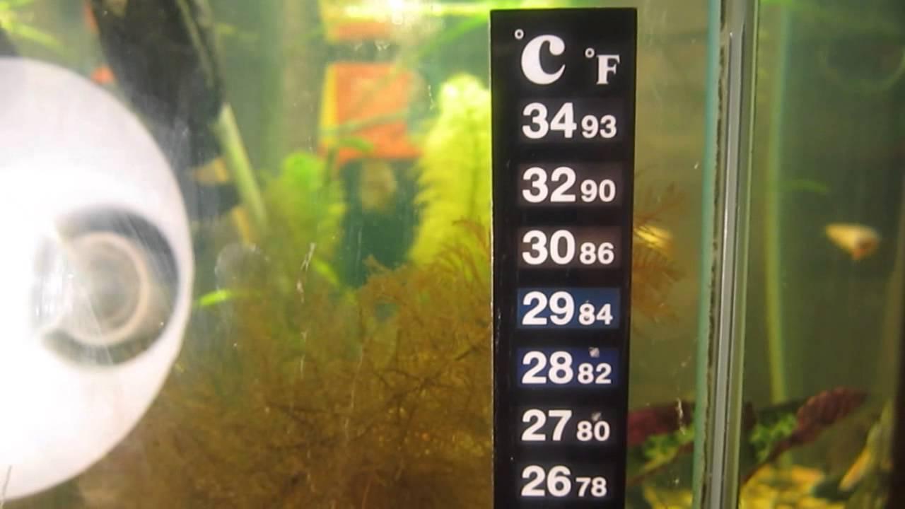 Картинки по запросу Термометр для аквариума