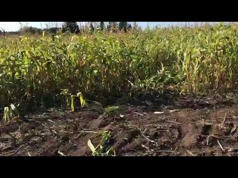 Гонщики на внедорожниках во время «Эчпочмак Трофи-2017» раздавили урожай в Менделеевском районе