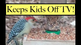 Diy Recycled Bird Feeder!