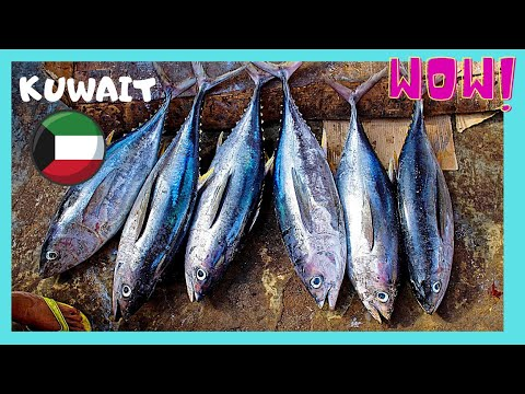 KUWAIT, the largest and most graphic FISH MARKET