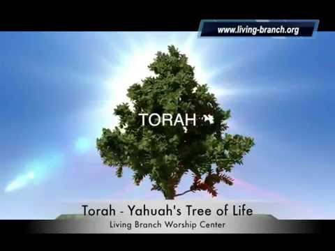 Torah - Yahuah's Tree of Life Presented By Living Branch Worship Center