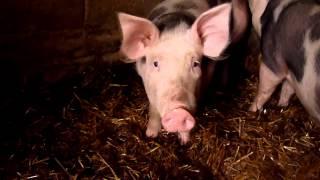 Zwierzęta na lubelskiej wsi