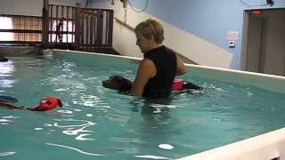 Dog Enjoys Learning How To Swim At Healing Waters In Canton, Oh!