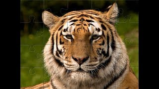 Puzzle zwierzęta - Tygrys- jigsaw puzzle for children tiger animals