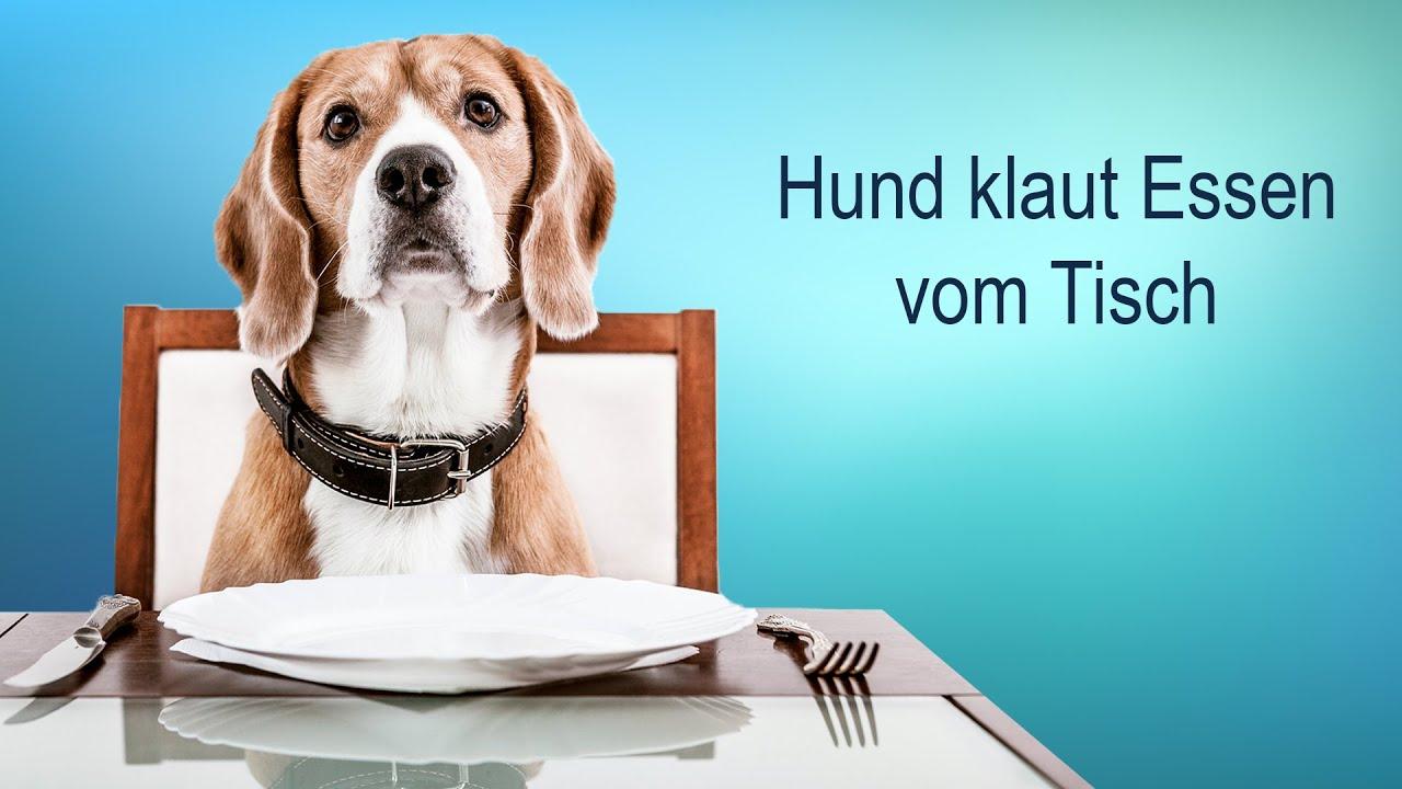 Hund essen Latexhandschuh