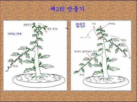 13.소국분재 맞춤형 수형 만들기.wmv