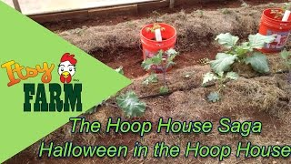 Halloween in the Hoop House - Fall Crops