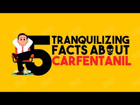 5 Tranquilizing Facts About Carfentanil   Drug Facts You Never Knew   Detox To Rehab
