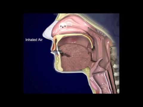 Respiratory system-3 respiratory mucosa