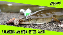 Aalangeln am Nord-Ostsee-Kanal | Angeln mit Grundrute und Posenrute | Anglerboard TV