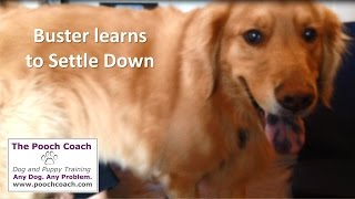 Training Your Dog To Settle Down And Relax