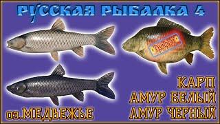 РР4 МЕДВЕЖЬЕ КАРП АМУР ФАРМ РУССКАЯ РЫБАЛКА 4 МЕДВЕЖКА КАРП RUSSIAN FISHING 4 CARP GRASS CARP