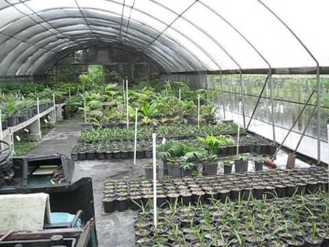 Caribbean Palms Nursery