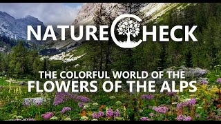 Flowers of the Alps - A Look into a colorful World