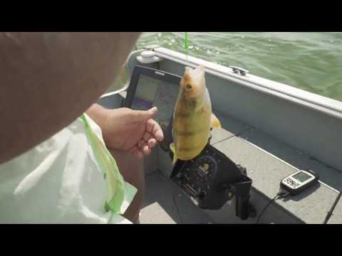 Perch Fishing Fundamentals In South Dakota