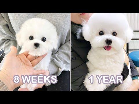 My Dog's journey from puppy to doggo