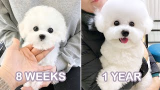 My Dog's journey from puppy to doggo