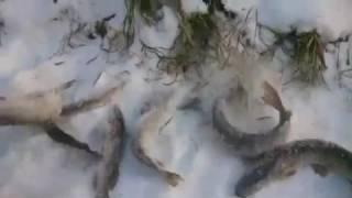 Зимняя рыбалка в Нягани