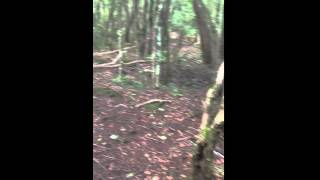 Entrance to Aokigahara Forest from Saiko Bat Cave