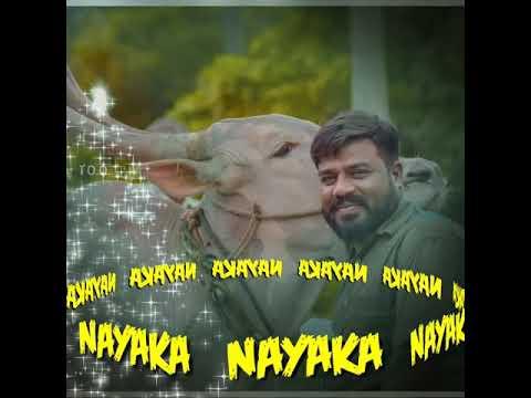 Nayaka 100 bull.speed king